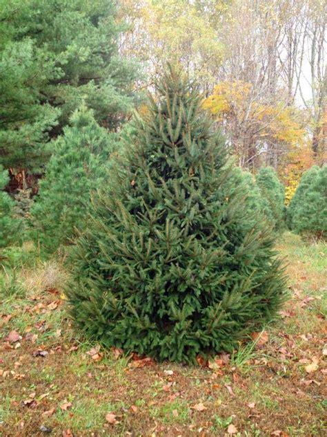 hidden lake christmas tree farm