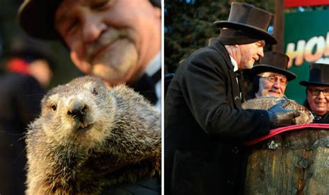 groundhog day uk groundhog day 2018 who is punxsutawney phil did he see