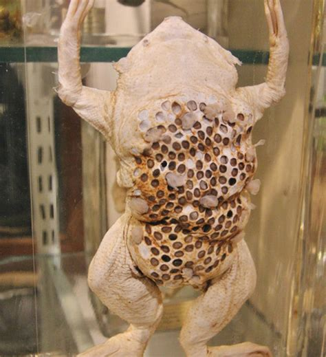 Fear Of Holes In Holes Pictures to Pin on Pinterest ... Lotus Pod Skin Disease
