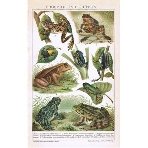 Decorative Frogs by Frogs And Toads Decorative Chromolithograph