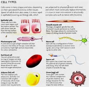 manash subhaditya edusoft tissues reservoir of