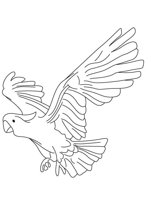 parrot coloring pages online parrot coloring pages the beautiful bird gianfreda net