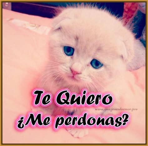 imagenes con frases bonitas de gatitos gatitos tiernos con frases de amor lindas gatitos tiernos