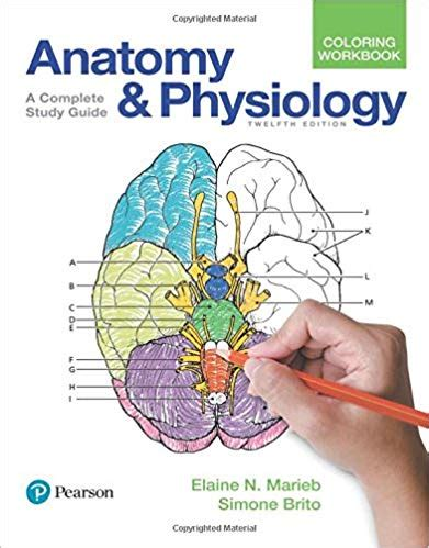 anatomy and physiology coloring book anatomy and physiology coloring book 12th edition pdf free