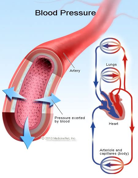 blood pressure high blood pressure hypertension symptoms signs causes