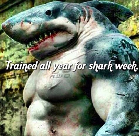 Meme Shark - in honor of shark week this sunday shark week memes