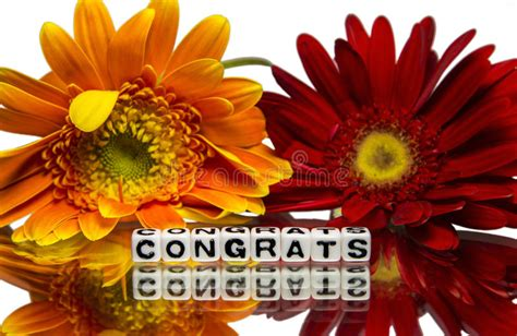congrats  red  yellow flowers stock photo image