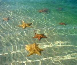 Home Design Story Friends 2 cushion sea stars common in shallow water institute