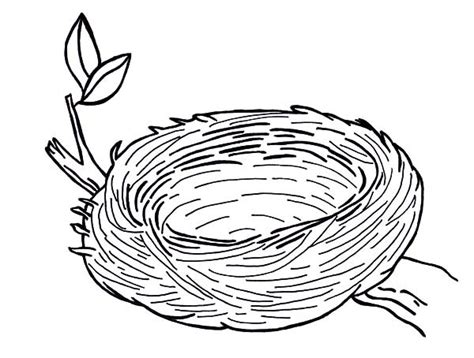 coloring pages of birds in a nest empty bird nest coloring page