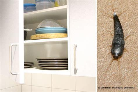 was kann gegen silberfische im schlafzimmer tun was du gegen silberfische in der kche oder im bad tun kannst