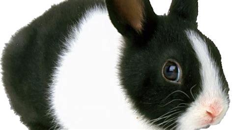 Black And White Rabbit Wallpaper | black and white rabbit hd wallpapers litle pups