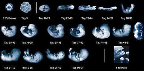 Logikq Scientifika Ufo Phenomenon Il Quot Disco Genetico Quot Un Reperto