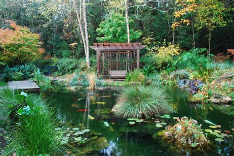 backyard coy ponds koi filters koi pond systems with self cleaning filters
