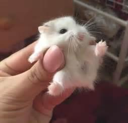 baby hamsters fuzzfeed