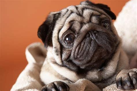 what is sneezing in dogs what is sneezing in dogs cuteness