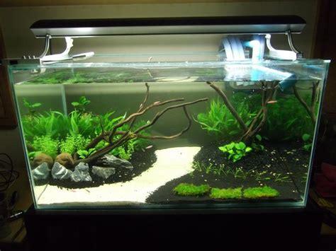 aquarium design for turtles 26 best images about fish tank on pinterest fish tanks