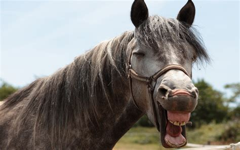 Cheva Maxi fonds d 233 cran chevaux gratuits