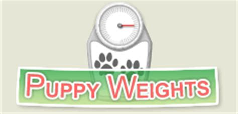 puppy weight predictor australian shepherd puppy growth chart models picture