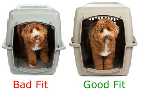 what size crate how to measure your pet for airline crate kennel kats n us
