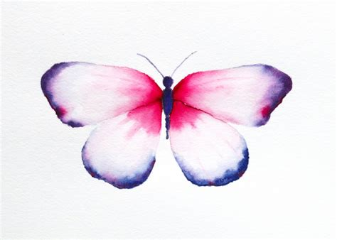new butterfly my painting room new butterfly prints