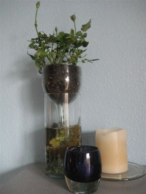 Wine Bottle Planter Self Watering by How To Make A Handy Self Watering Wine Bottle Planter