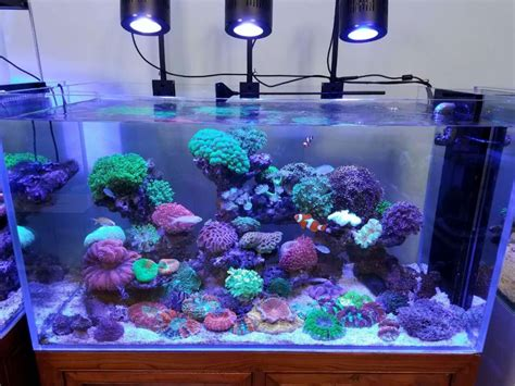 nano reef aquarium lighting 2017 best 2ft 120w nano reef aquarium led lighting