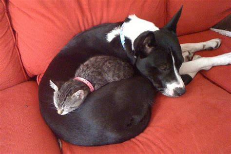 puppy and kitten cuddling and cat cuddle daily picks and flicks