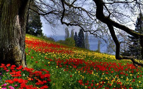 dream spring 2012 spring landscape hd wallpaper 2560 215 1600 dream spring 2012 beautiful spring wallpapers hd