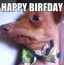 Funny Animal Birthday Memes - 25 best ideas about birthday memes on pinterest happy