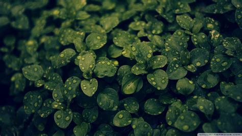 wallpaper tumblr green dark green backgrounds wallpaper cave