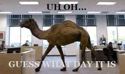 geico camel commercial hump day hump day humor klextin page 6