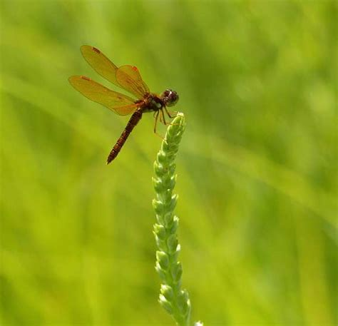 dragonfly summer center for humans nature