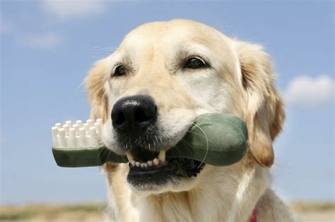 problems in dogs dental disease in dogs everything about teeth problems