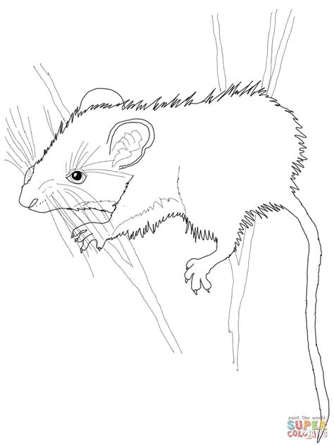 desert mouse coloring page mice coloring page coloring home