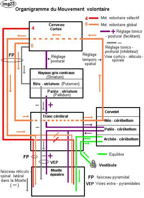 logiciel schéma fonctionnel gratuit svt lycee college le de padmyst anatomie a