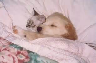 chat et au lit chat et sur chat mignon