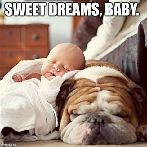Sweet Dreams Meme - image tagged in bulldog baby imgflip