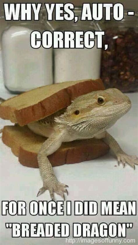 Bearded Dragon Meme - the 25 best bearded dragon funny ideas on pinterest