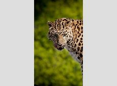 Wallpaper Leopard, 4k, Animals #14956 Japanese Wallpaper