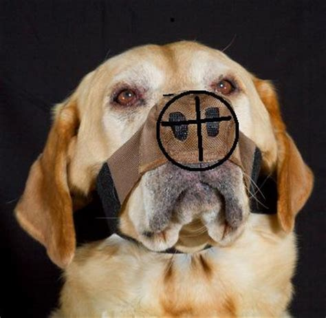 discoid lupus in dogs nose protectors about us