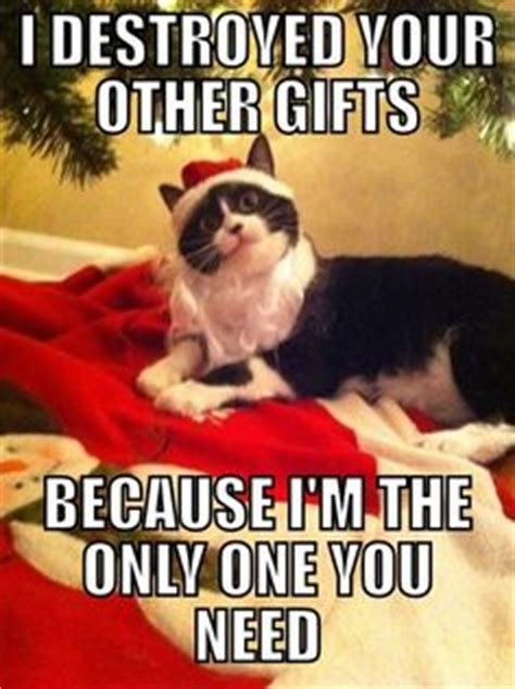 Christmas Day Meme - 1000 images about christmas cats on pinterest christmas