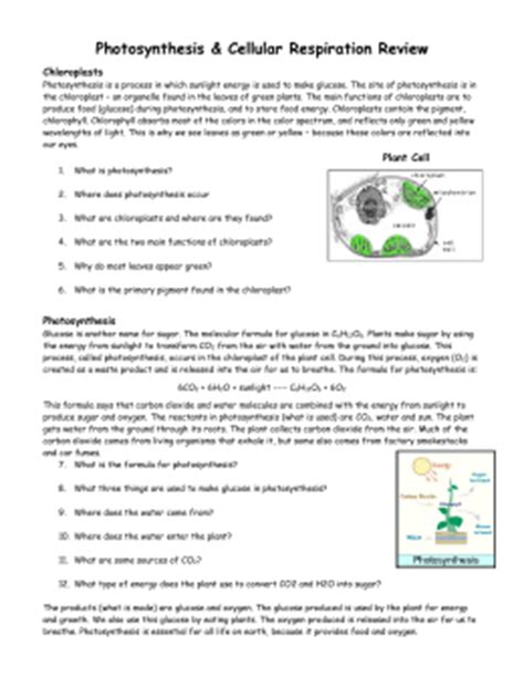 Photosynthesis Review Worksheet by Chapter 12