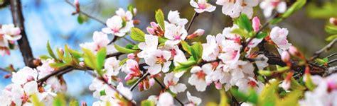 come assumere i fiori di bach magazine natur srl