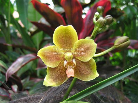 orchideen garten gallery mindtravelling