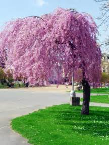one more pink tree by stacy raven 21 on deviantart