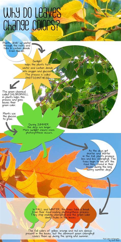 what causes the leaves to change color in the fall 1000 ideas about autumn leaf color on oak