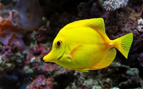 Permalink to Hd Sea Fish Wallpaper