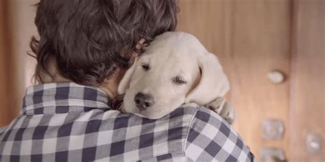 that has puppies commercial budweiser commercial with adorable even more adorable has twist
