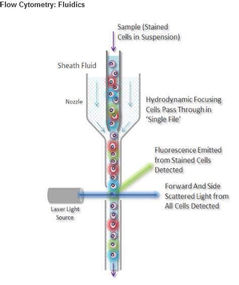 facs diagram flow cytometry fcm facs what is flow cytometry