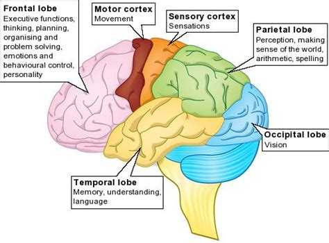 brain diagram lobes anger and traumatic brain injury frontal lobe brain and